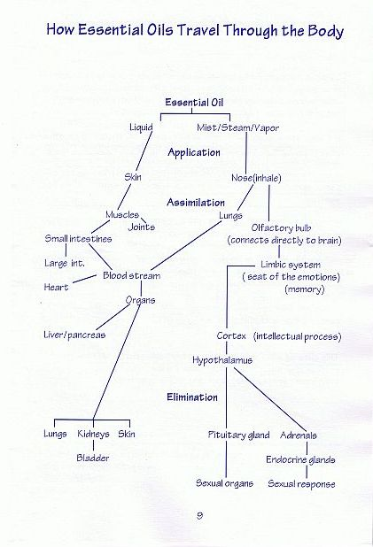 how-essential-oils-travel3